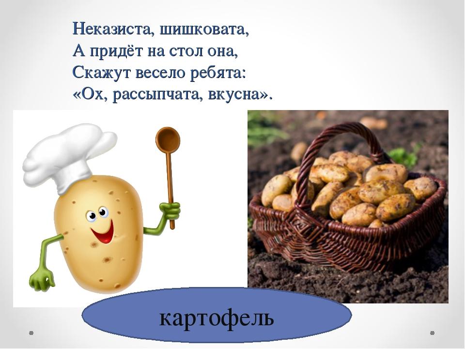 картофель Неказиста, шишковата, А придёт на стол она, Скажут весело ребята: «...