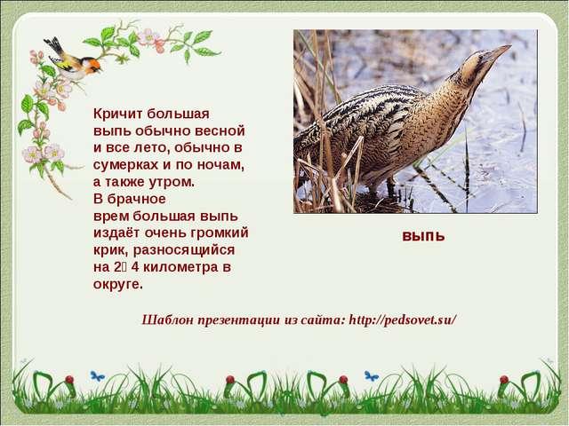 выпь Кричит большая выпь обычно весной и все лето, обычно в сумерках и по ноч...