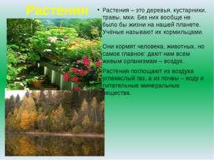 Растения Растения – это деревья, кустарники, травы, мхи. Без них вообще не бы