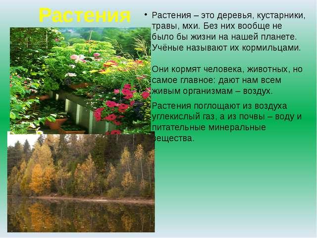 Растения Растения – это деревья, кустарники, травы, мхи. Без них вообще не бы...