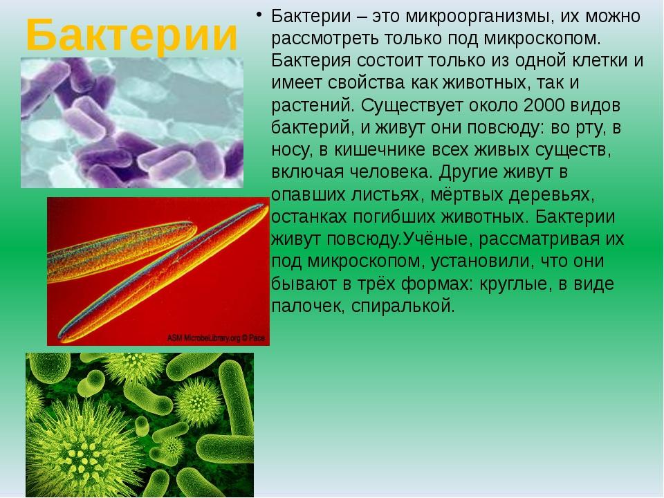 Бактерии Бактерии – это микроорганизмы, их можно рассмотреть только под микро...