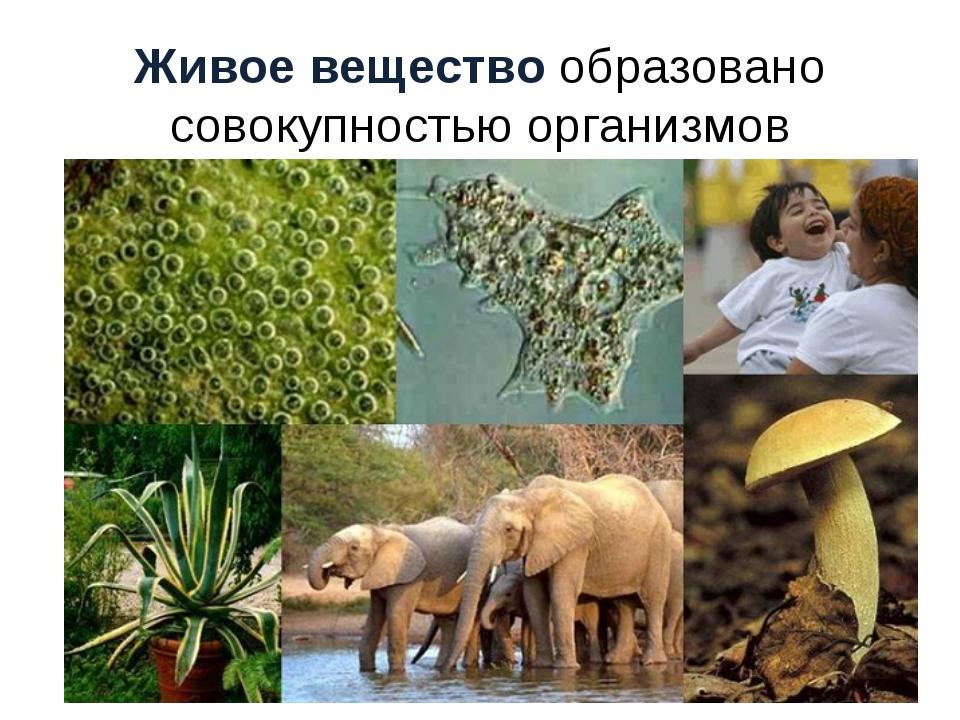 Живое вещество образовано совокупностью организмов