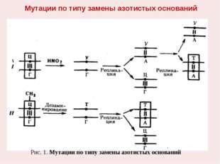 Мутации по типу замены азотистых оснований Рис. 1. Мутации по типу замены азо