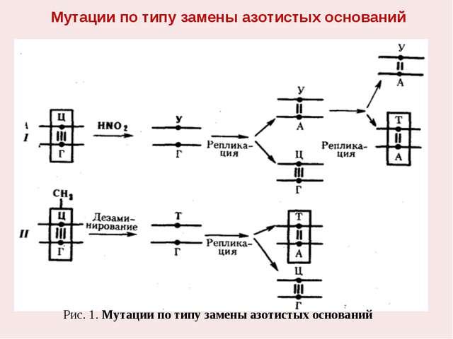 Мутации по типу замены азотистых оснований Рис. 1. Мутации по типу замены азо...