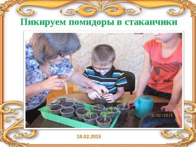 Пикируем помидоры в стаканчики 18.02.2015
