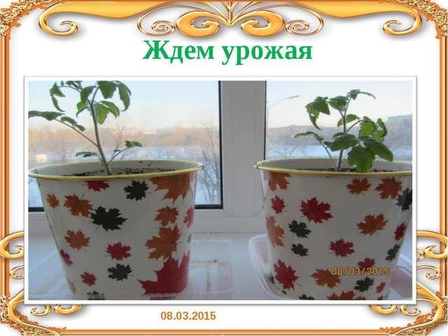 Ждем урожая 08.03.2015