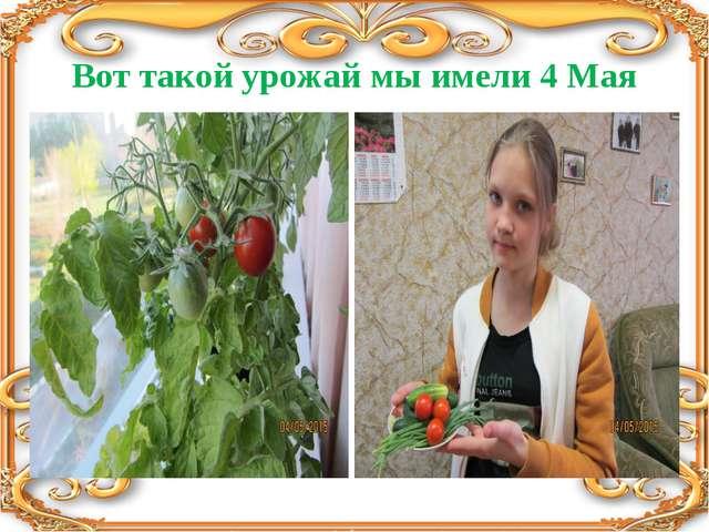Вот такой урожай мы имели 4 Мая