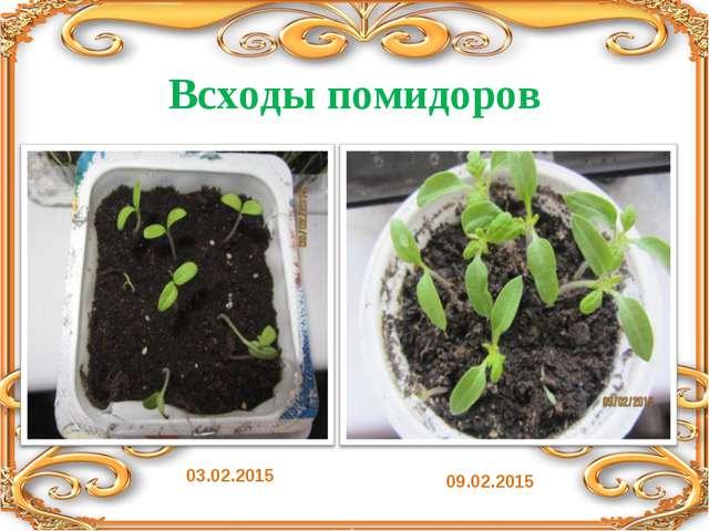Всходы помидоров 09.02.2015 03.02.2015