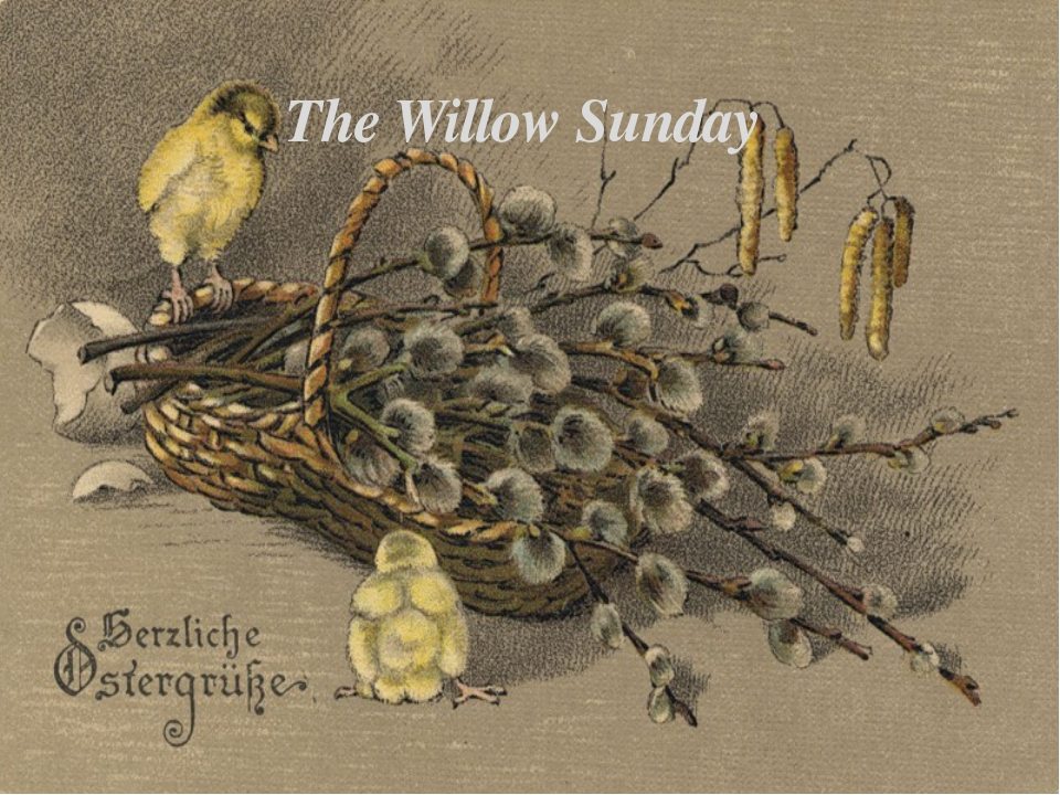 The Willow Sunday