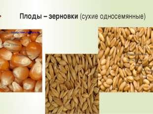 Многообразие злаковых Пшеница Рис Бамбук Сахарный тростник Кукуруза Декоратив