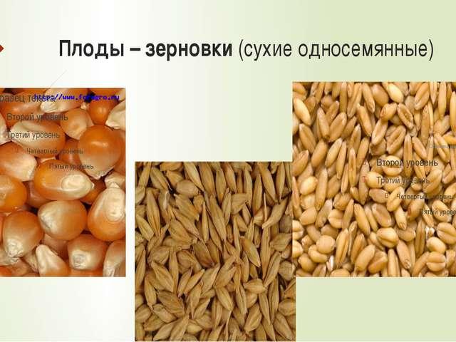 Многообразие злаковых Пшеница Рис Бамбук Сахарный тростник Кукуруза Декоратив...