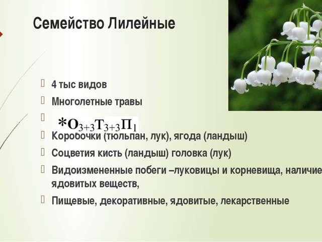 Типы соцветий Сложный колос Метелка Початок Султан