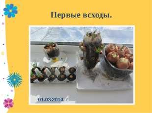 Первые всходы. 01.03.2014. г