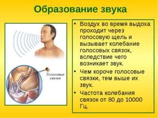 Образование звука Воздух во время выдоха проходит через голосовую щель и вызы