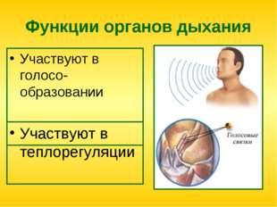 Функции органов дыхания Участвуют в голосо-образовании Участвуют в теплорегул