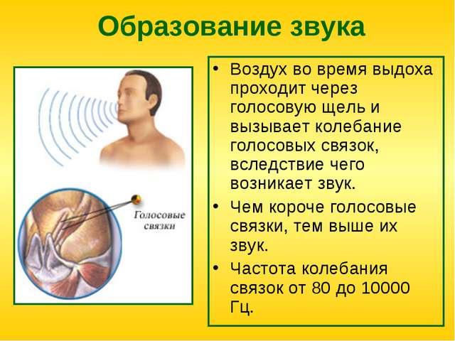 Образование звука Воздух во время выдоха проходит через голосовую щель и вызы...