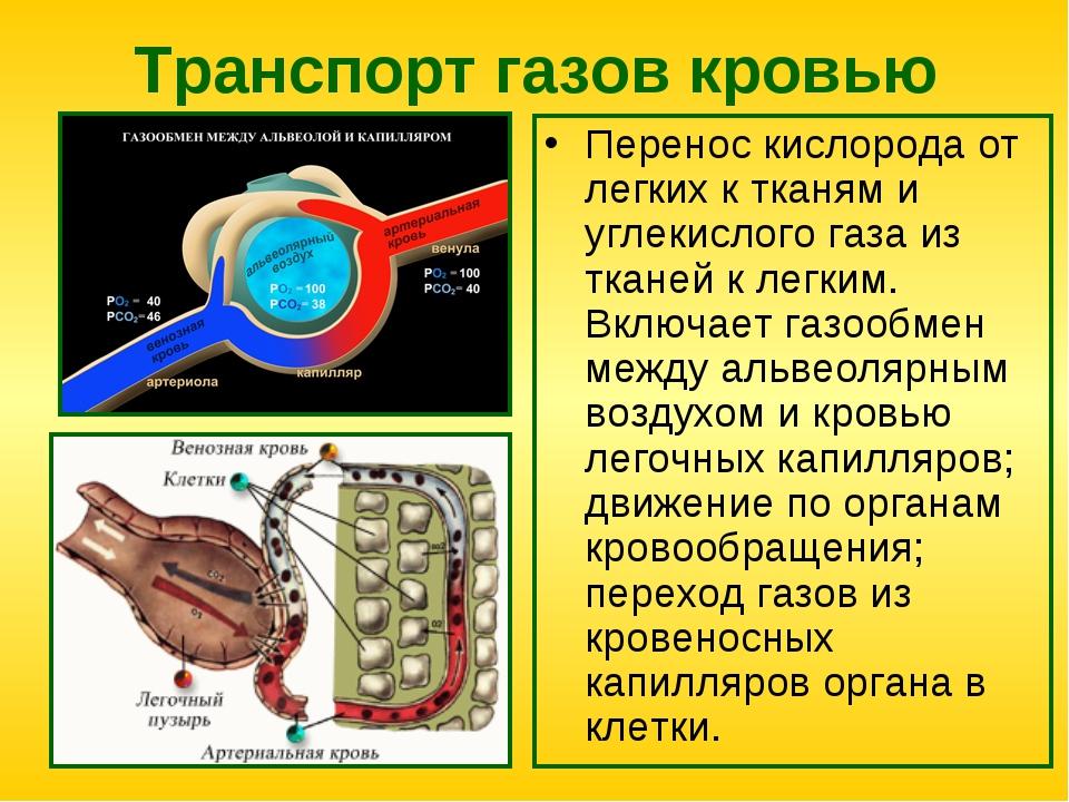 Транспорт газов кровью Перенос кислорода от легких к тканям и углекислого газ...