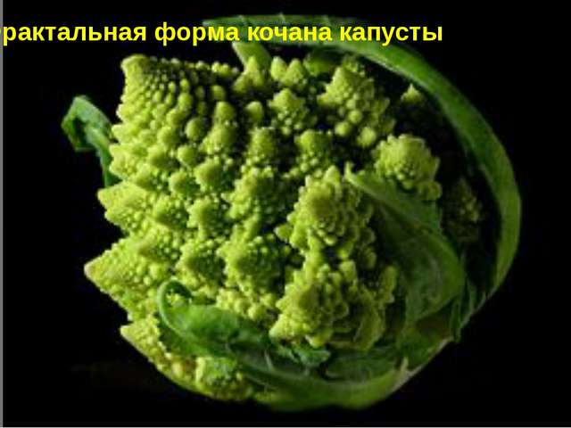 Фрактальная форма кочана капусты