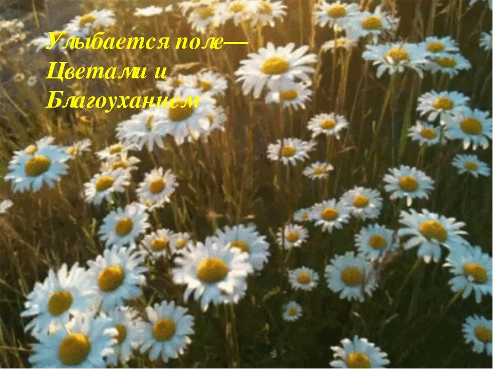 Улыбается поле—Цветами и Благоуханием