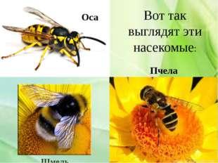 Вот так выглядят эти насекомые: Оса Шмель Пчела