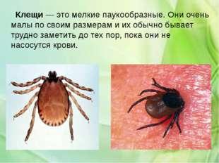 Клещи— это мелкие паукообразные. Они очень малы по своим размерам и их обыч