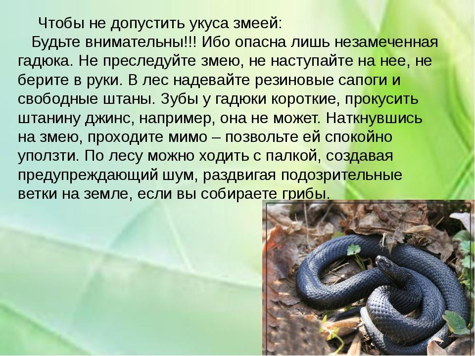 Укусы ядовитых змей  первая помощь при укусе змеигадюки