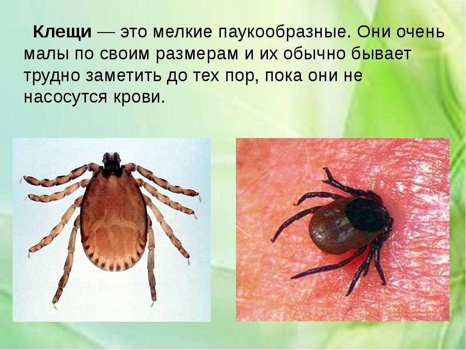Клещи— это мелкие паукообразные. Они очень малы по своим размерам и их обыч...
