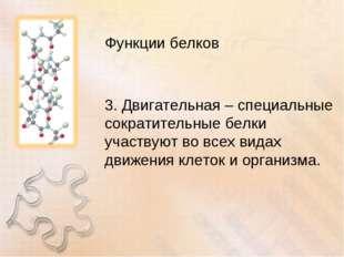 Функции белков 3. Двигательная – специальные сократительные белки участвуют в