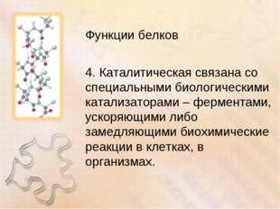 Функции белков 4. Каталитическая связана со специальными биологическими катал