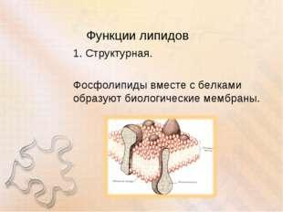 Функции липидов 1. Структурная. Фосфолипиды вместе с белками образуют биологи