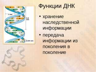Функции ДНК хранение наследственной информации передача информации из поколен