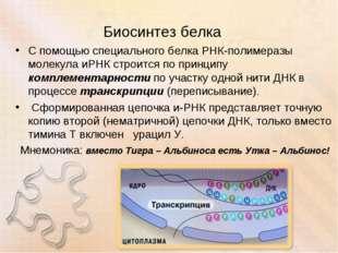 Биосинтез белка С помощью специального белка РНК-полимеразы молекула иРНК стр