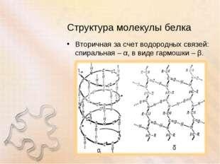 Структура молекулы белка Вторичная за счет водородных связей: спиральная – α,