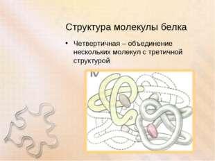 Структура молекулы белка Четвертичная – объединение нескольких молекул с трет