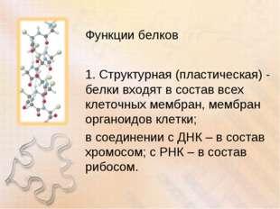 Функции белков 1. Структурная (пластическая) - белки входят в состав всех кле
