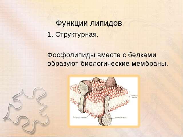 Функции липидов 1. Структурная. Фосфолипиды вместе с белками образуют биологи...