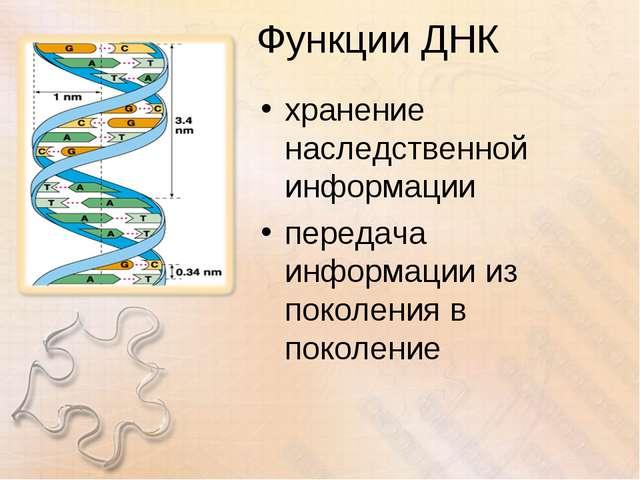 Функции ДНК хранение наследственной информации передача информации из поколен...