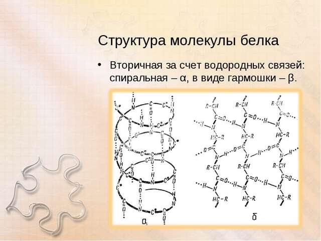 Структура молекулы белка Вторичная за счет водородных связей: спиральная – α,...