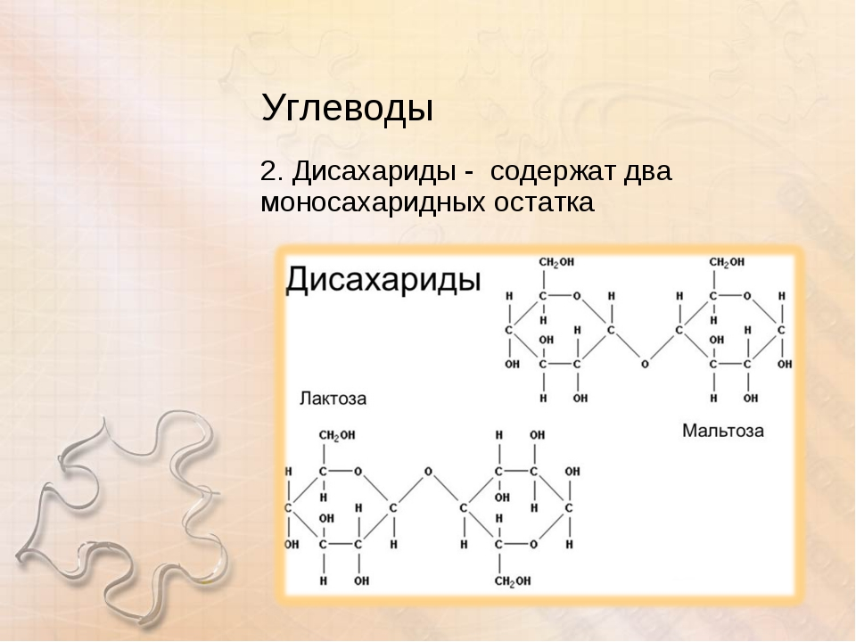 Углеводы 2. Дисахариды - содержат два моносахаридных остатка