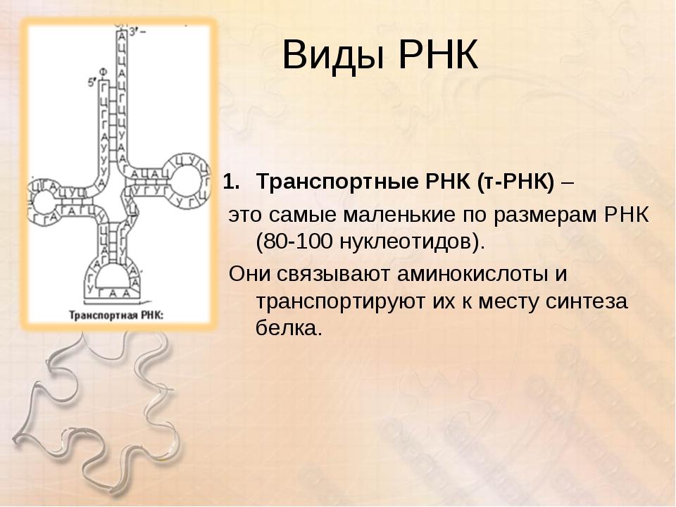 Виды РНК Транспортные РНК (т-РНК) – это самые маленькие по размерам РНК (80-1...
