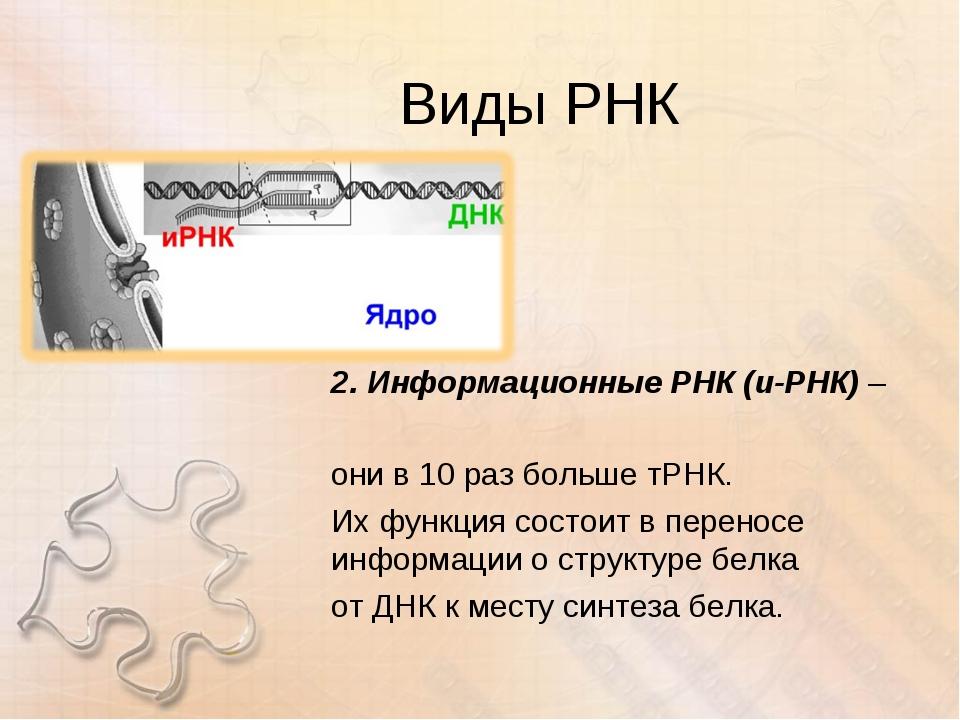 Виды РНК 2. Информационные РНК (и-РНК) – они в 10 раз больше тРНК. Их функция...