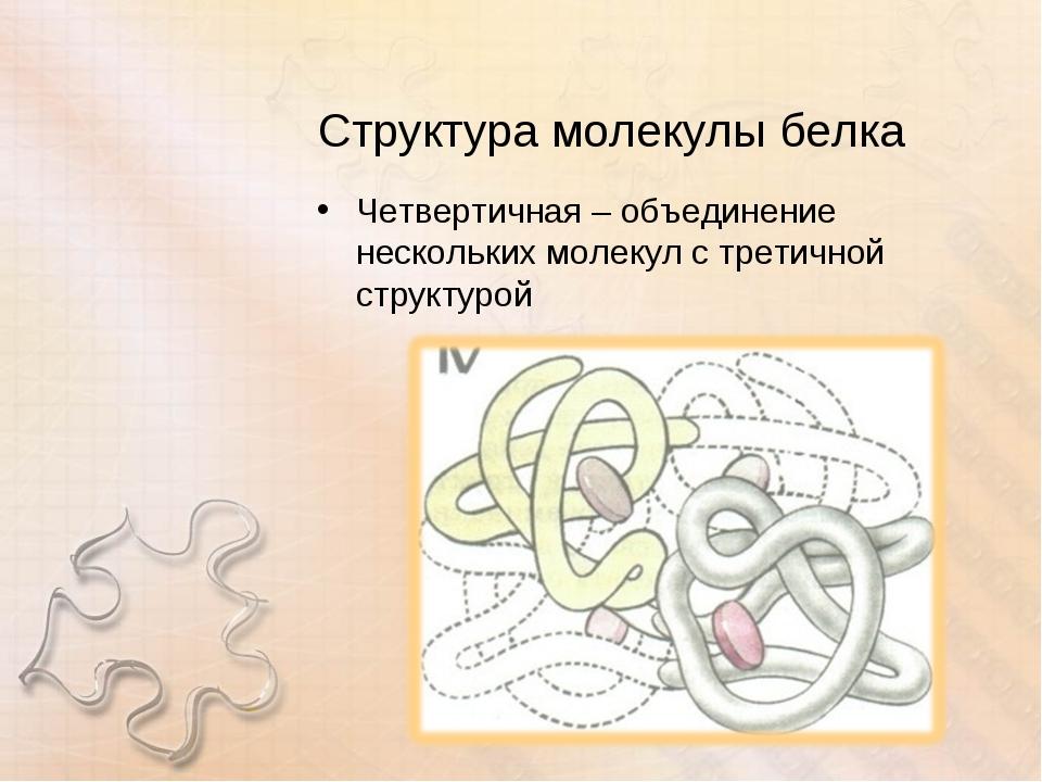 Структура молекулы белка Четвертичная – объединение нескольких молекул с трет...