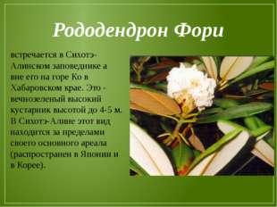 Рододендрон Фори встречается в Сихотэ-Алинском заповеднике а вне его на горе