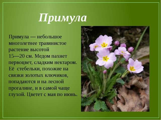Примула Примула — небольшое многолетнее травянистое растение высотой 15—20 см...