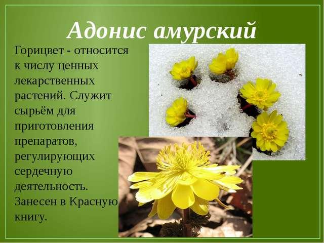 Адонис амурский Горицвет - относится к числу ценных лекарственных растений. С...