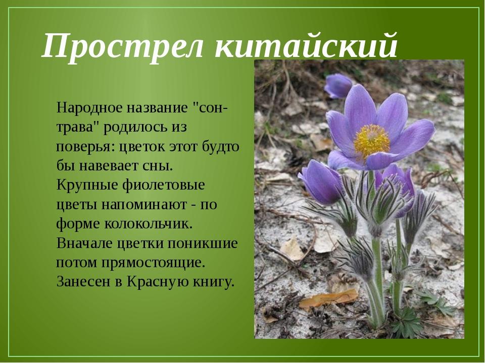 Цветок из 9 букв название