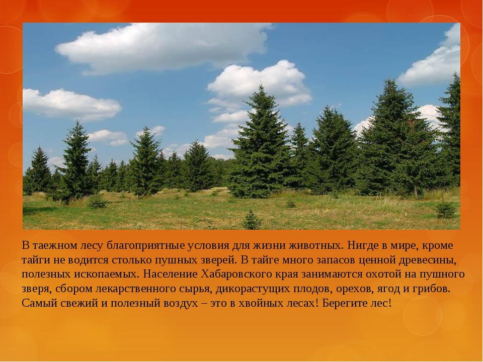 В таежном лесу благоприятные условия для жизни животных. Нигде в мире, кроме...