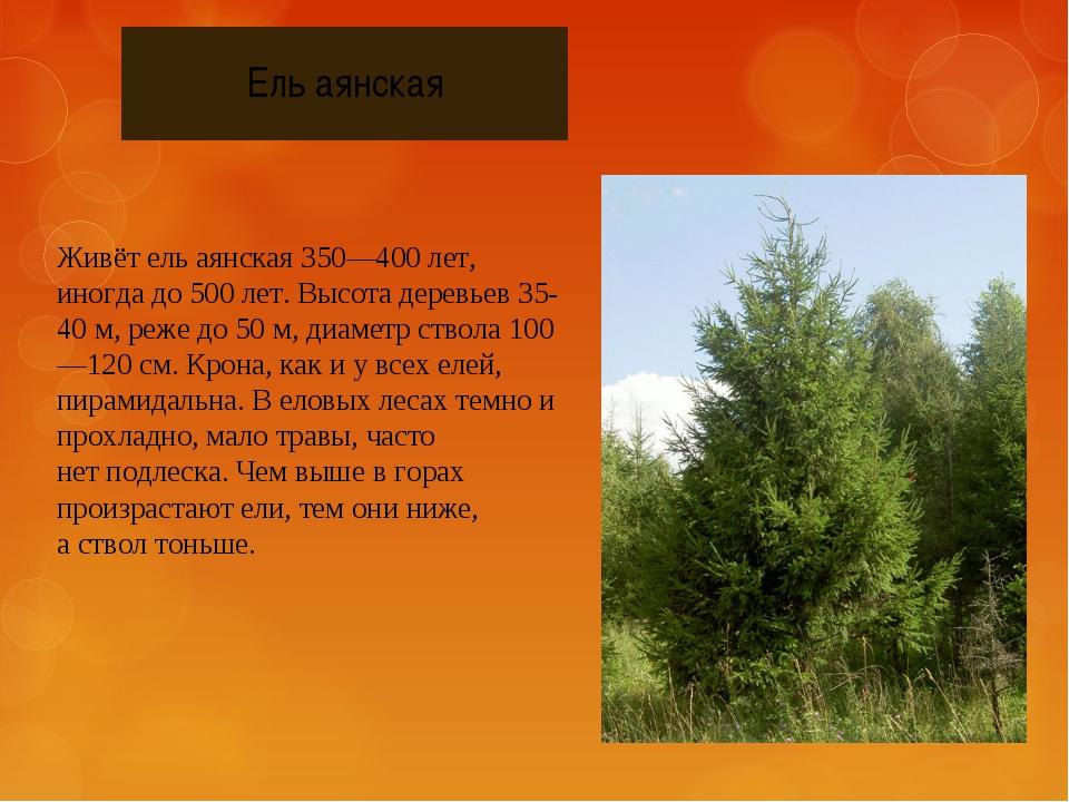 Ель аянская Живёт ель аянская 350—400 лет, иногда до 500 лет. Высота деревьев...
