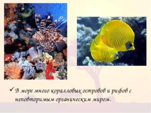 В море много коралловых островов и рифов с неповторимым органическим миром.