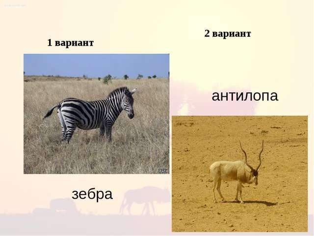 1 вариант 2 вариант зебра антилопа
